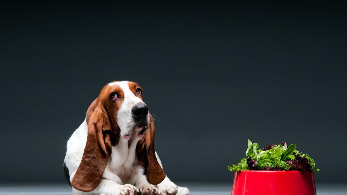Ska hundar också vara vegetarianer?