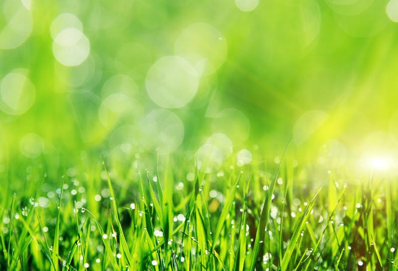 Beautiful spring field with a green grass