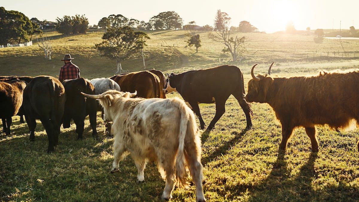 Den klimatsmarta köttätaren, del 3