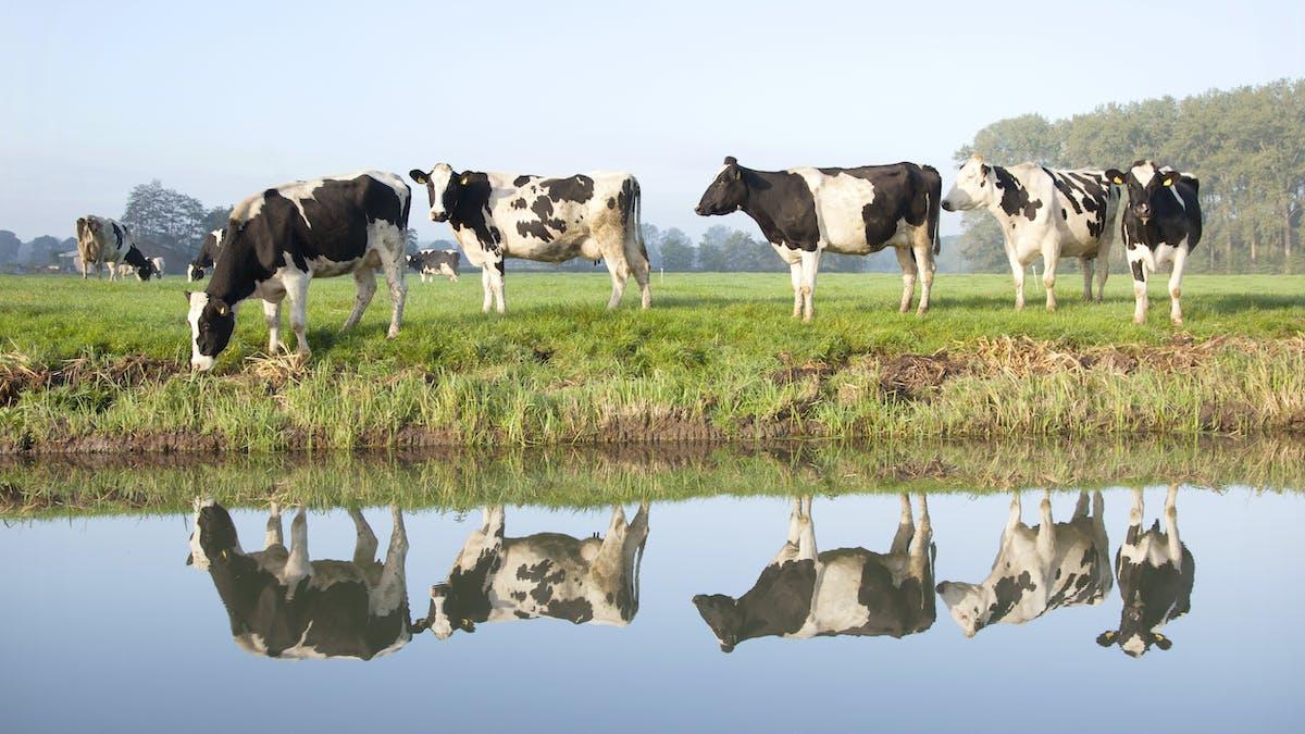 Saken är biff, del 2: köttet och klimatet