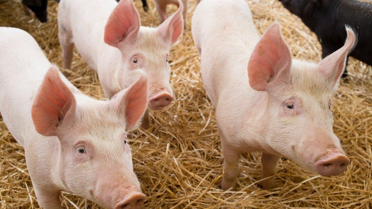 Saken är biff, del 4: allt kött är hö