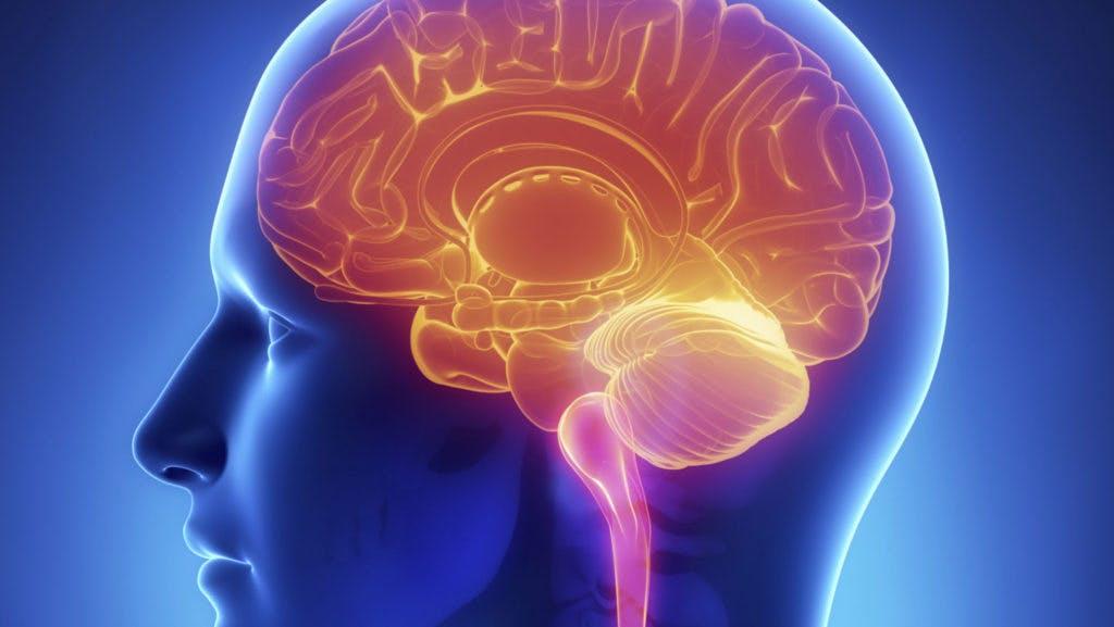 Ny studie: Ketoner stabiliserar hjärnfunktioner