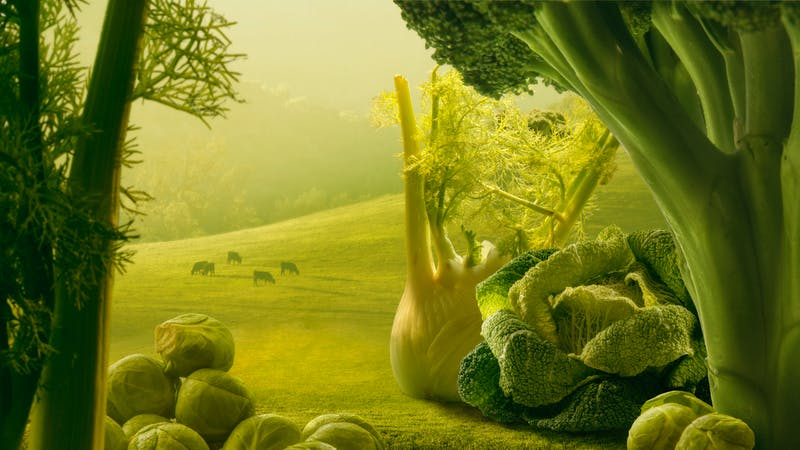 Surreal giant green vegetables in sunset field