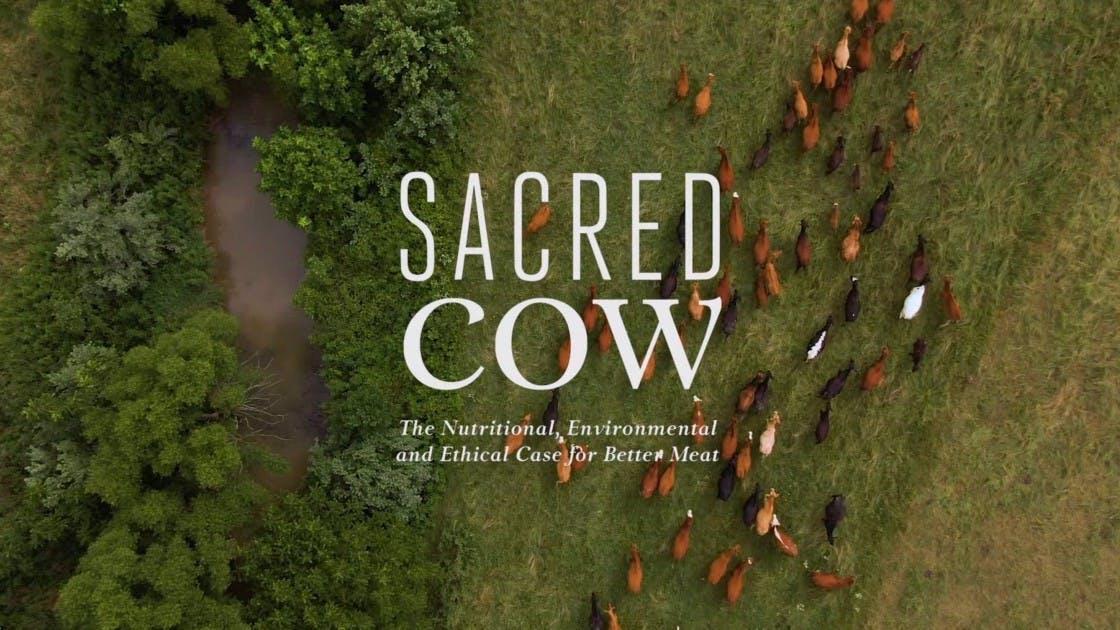 Recension av Sacred Cow: en djärv och transparent skildring av bättre köttproduktion