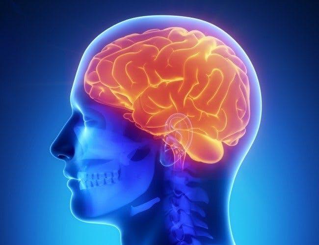 brain-650x499
