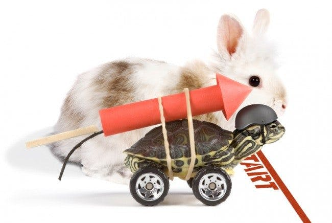 Rabbit-vs-turtle-650x436
