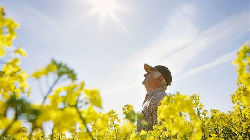 Could Vitamin D Protect Against Alzheimer's?