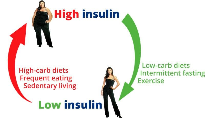 Weight Control – The Calories vs. Insulin Theory - Diet Doctor