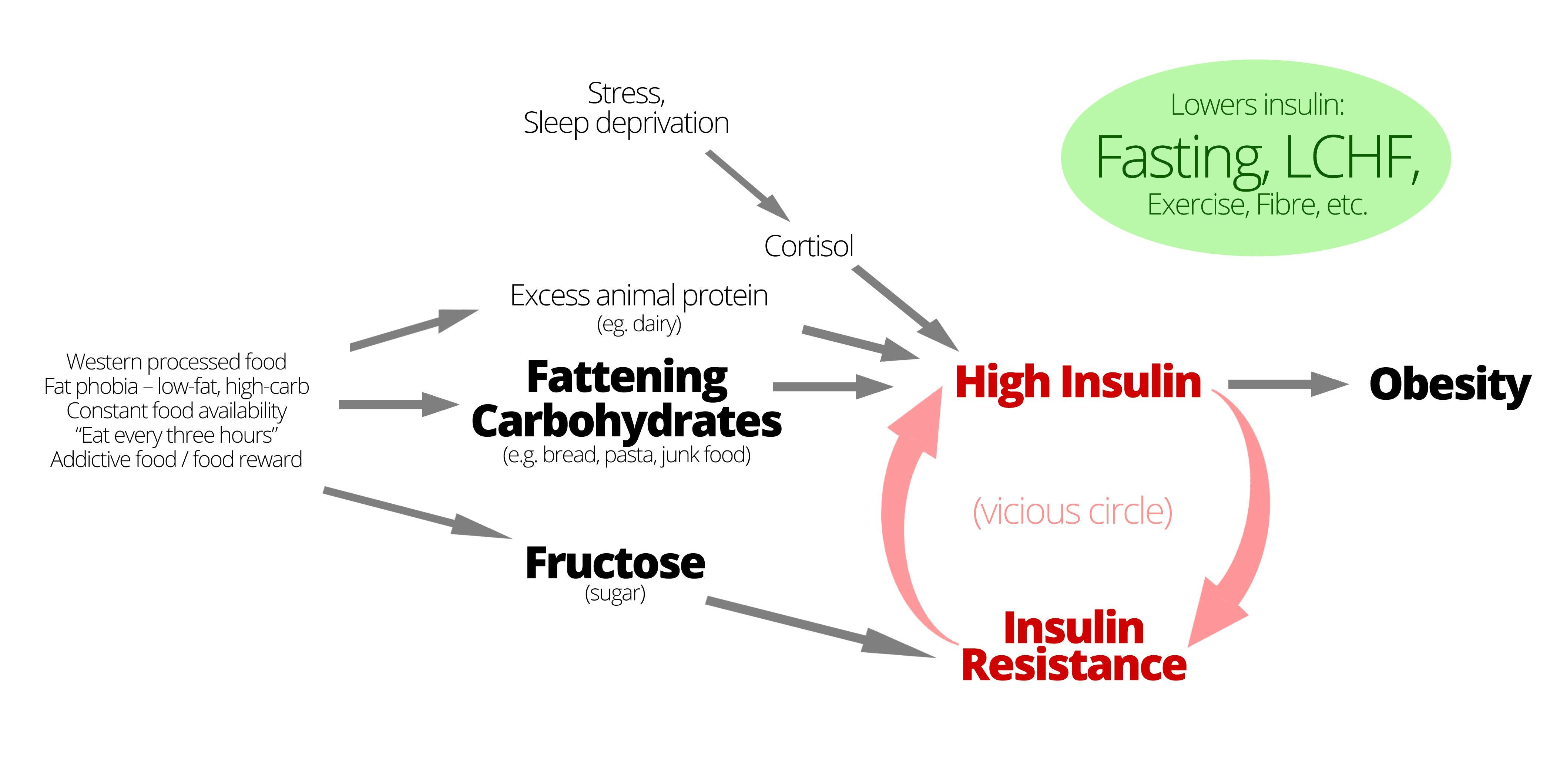 """How to Lose Weight – the """"Magic"""" vs. the Insulin Way"""
