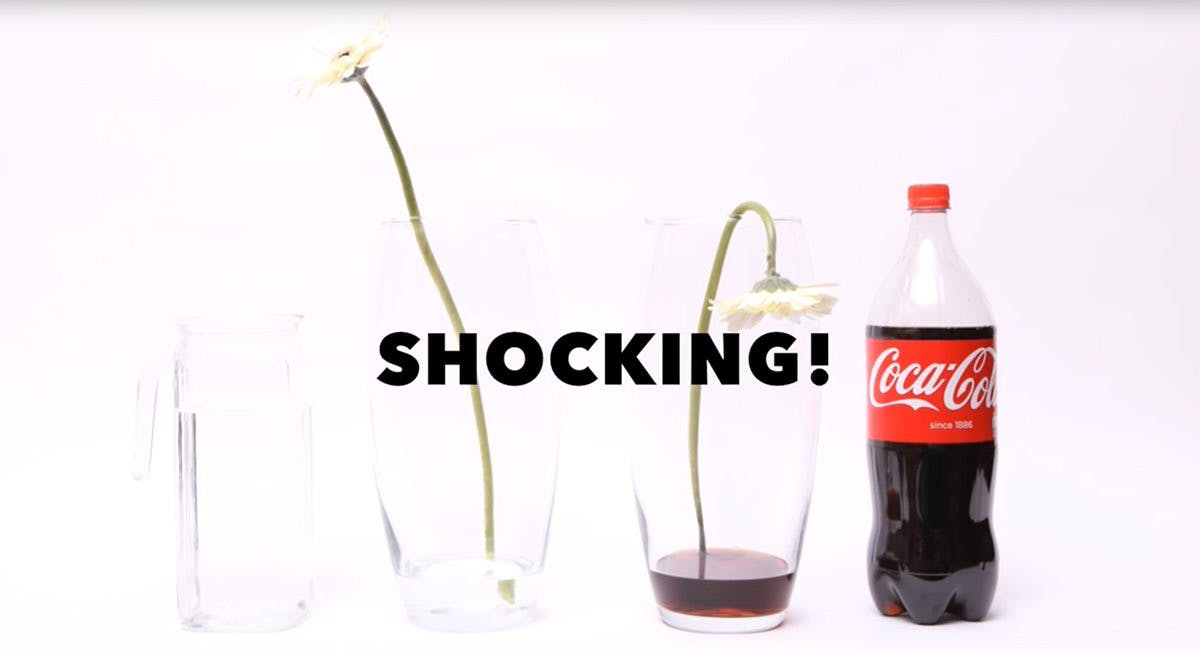 What Does Coca-Cola Do to a Flower?