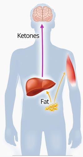 ketogenic diet effect on the body