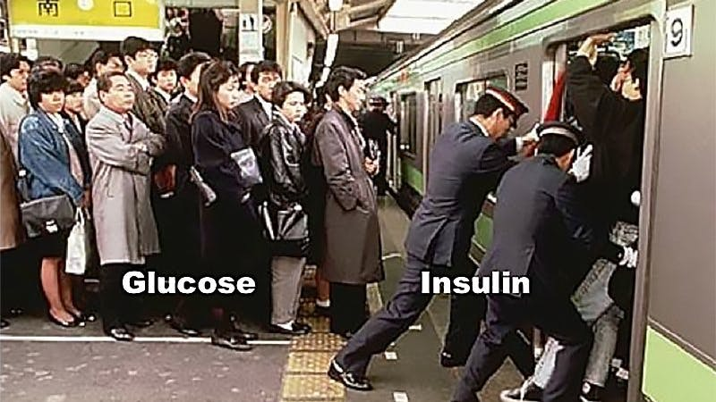A new paradigm of insulin resistance