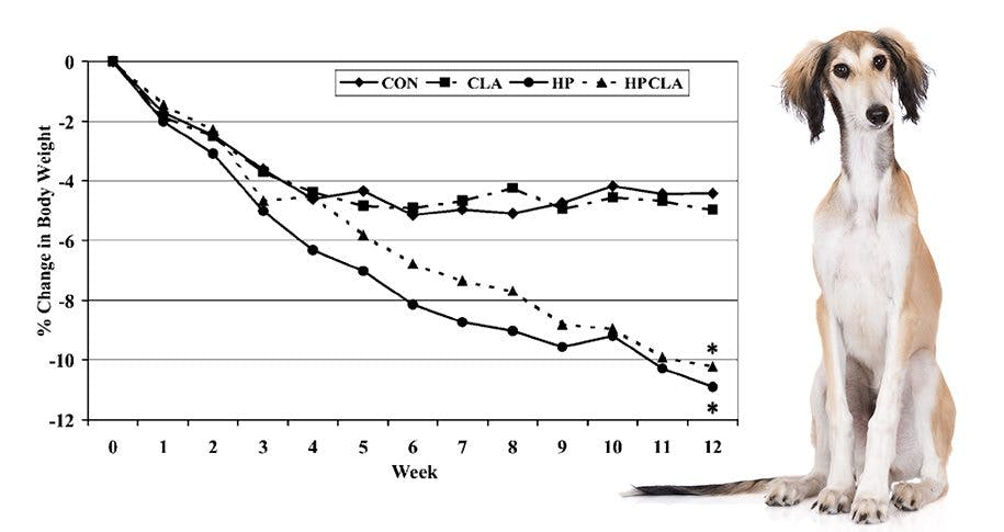 Even Dogs Lose More Weight on Low Carb