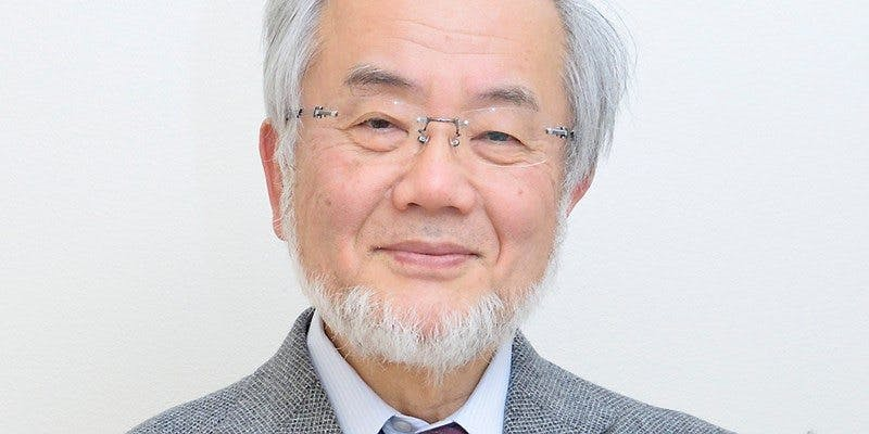 Yoshinori Ohsumi – awarded the Nobel Prize for his discoveries of mechanisms for autophagy