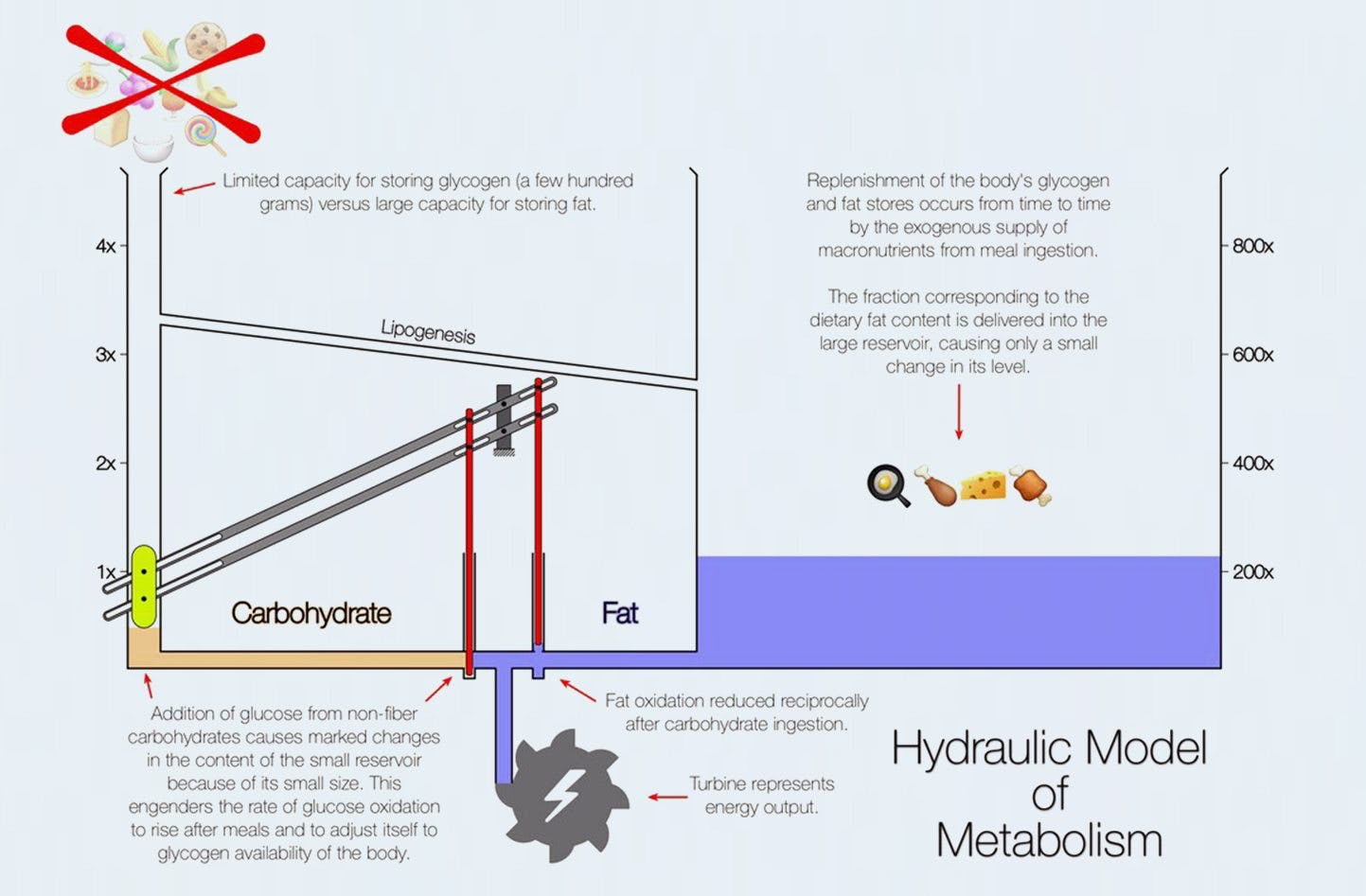 <strong>Carb vs. Fat Metabolism</strong> – The Dr. Ted Naiman Hydraulic Model