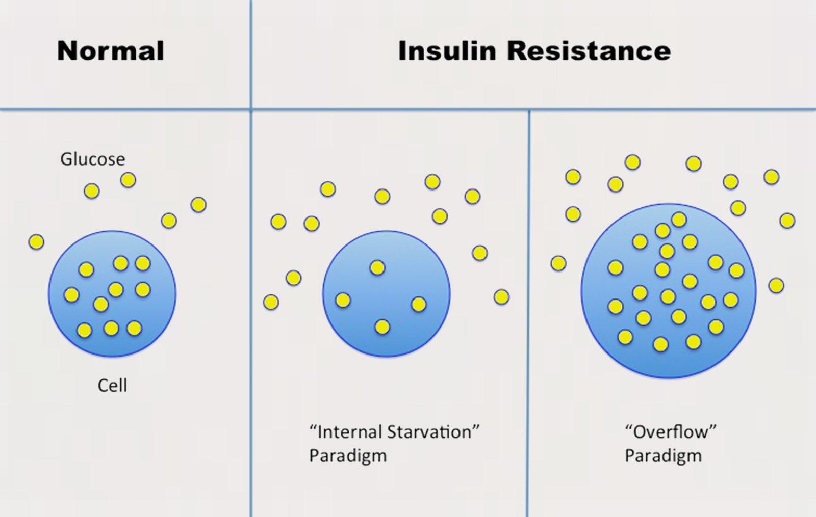 normalvsinsulinresistance