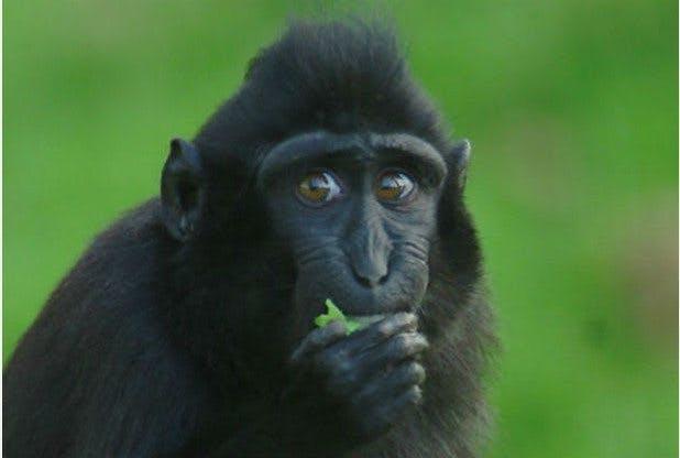 "No More Bananas for Monkeys – Like Giving Them ""Cake and Chocolate"""