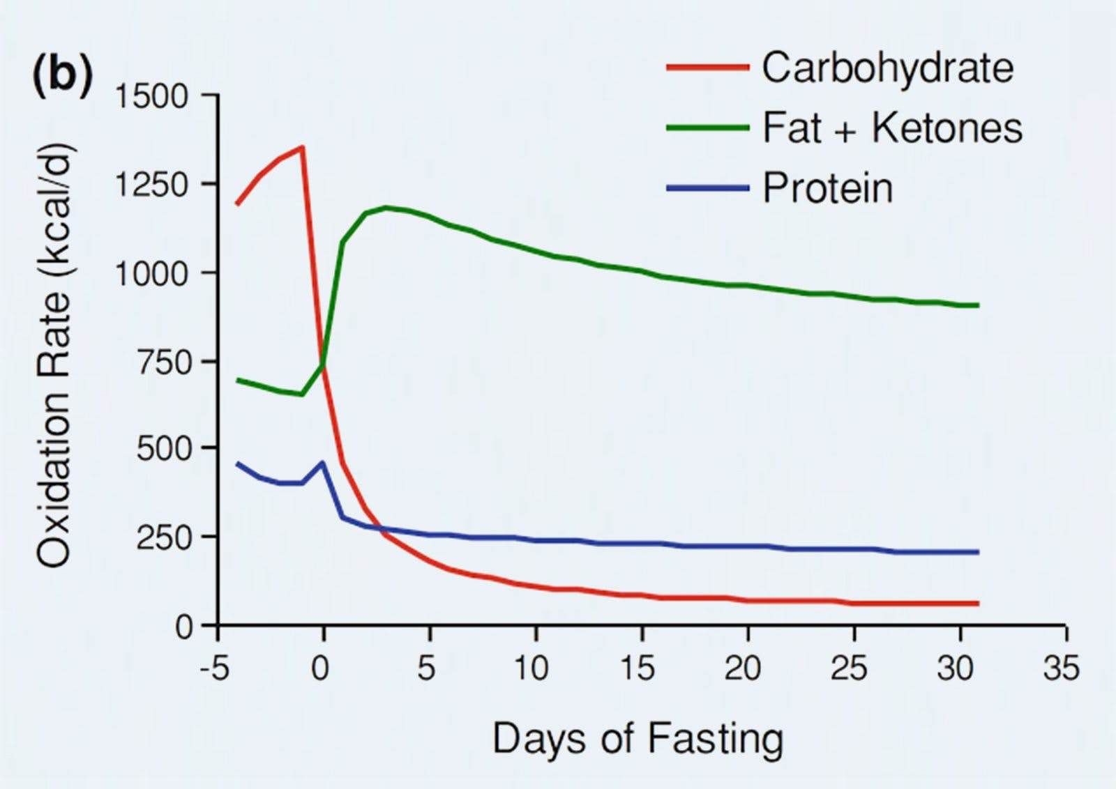 Fasting and Muscle Gain