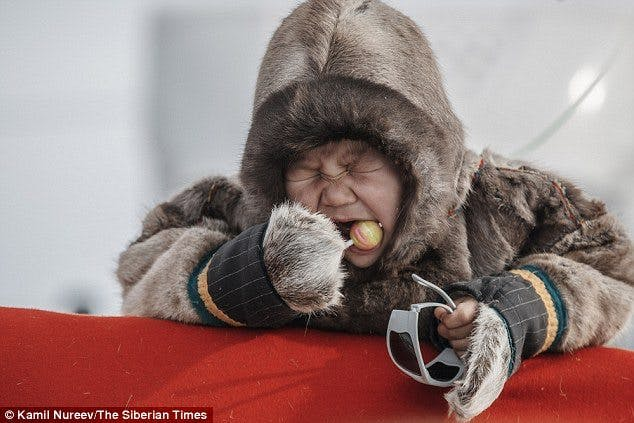 First Cases of Obesity in Siberian Tribes As Fatty Fish Is Swapped for Western Junk Food