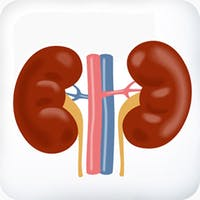 Keto and kidneys