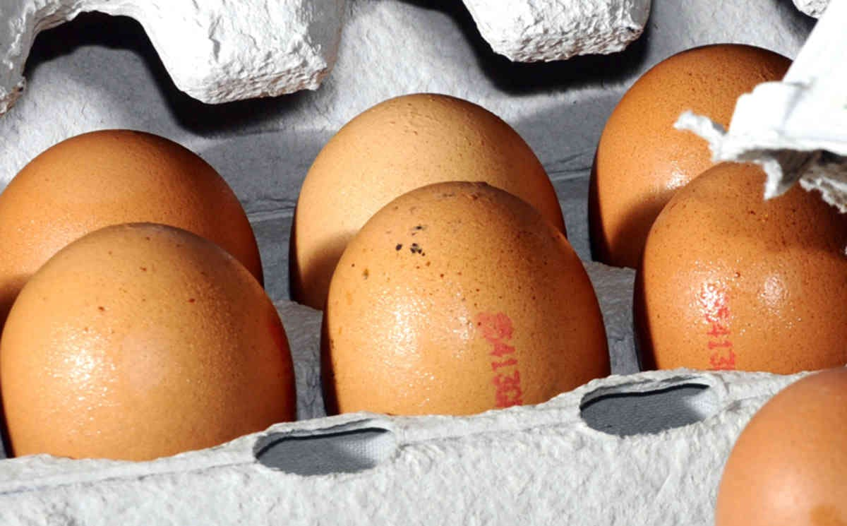 WOOLWORTHS CAGED EGGS PHASE OUT