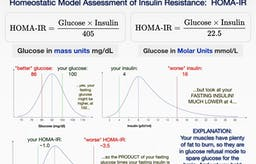 Why your fasting blood sugar might still be high on low carb