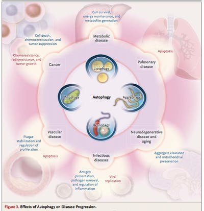 Autophagy – a cure for many present-day diseases? - Diet Doctor