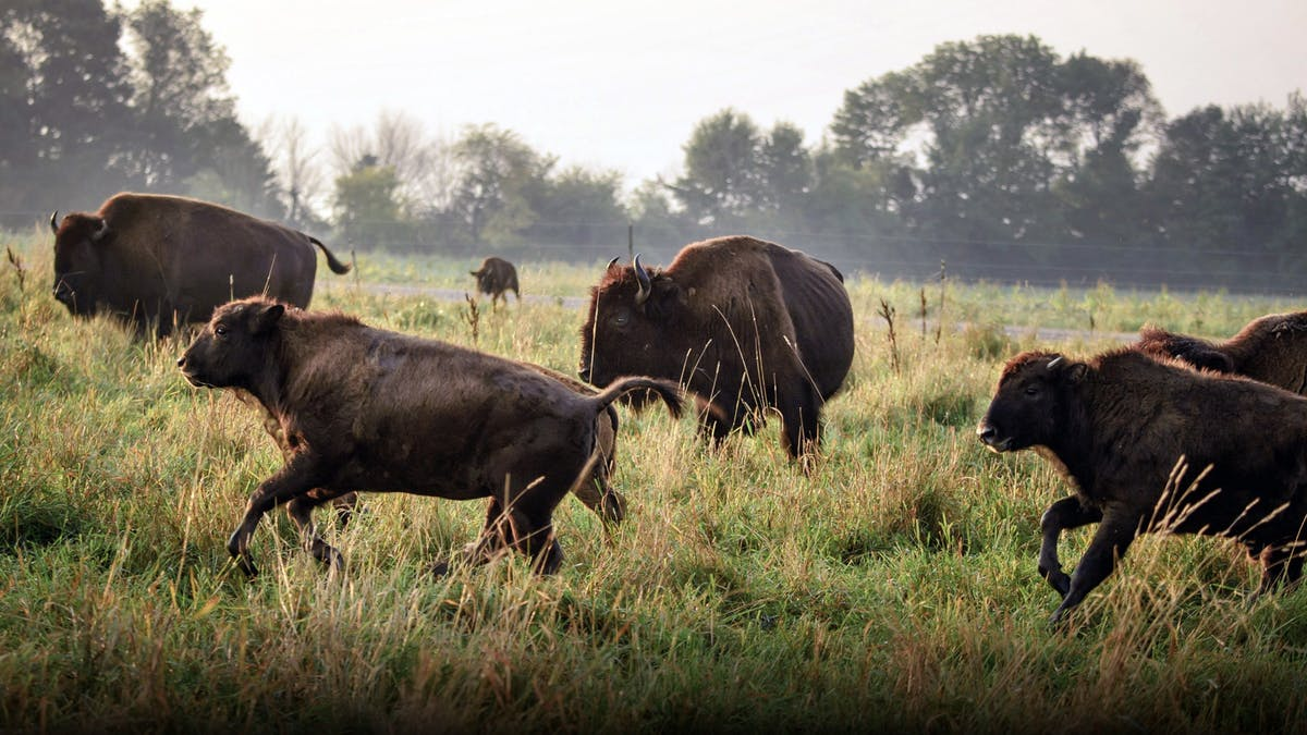 Soaring demand for grass-fed meat is changing the industry