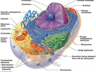 Cell_Structure_Fig_032.crop_1200x900_013.preview