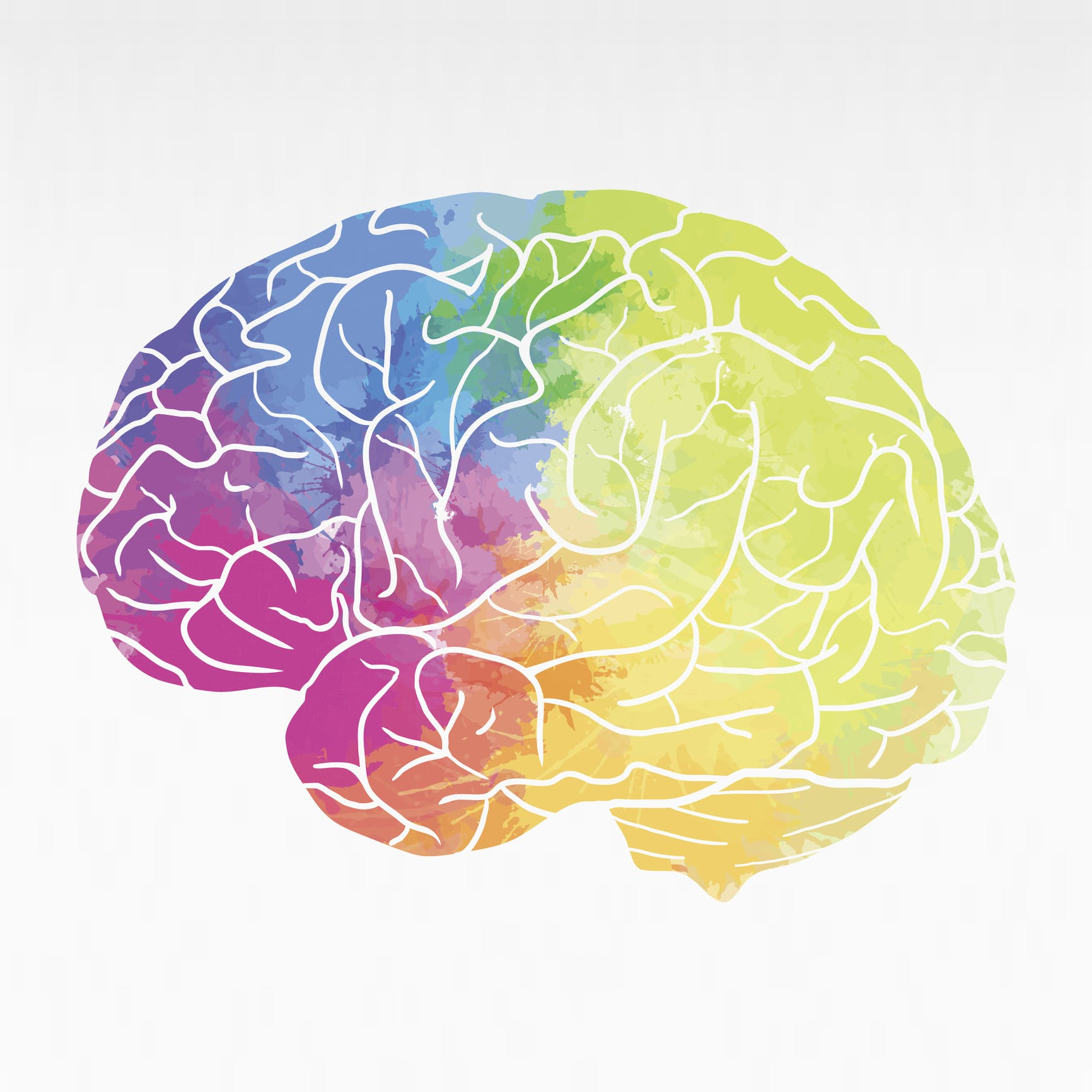 Human brain with rainbow watercolor spray on a white background