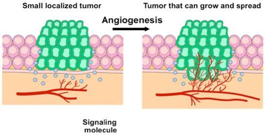 angiogenesis-rew