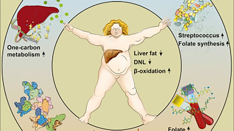 New study: Can low carb help reverse a fatty liver?