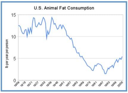 Animal-fat-1