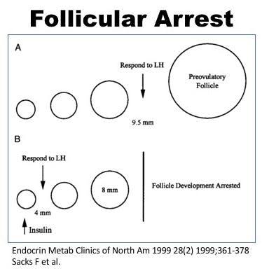 Follicle Arrest