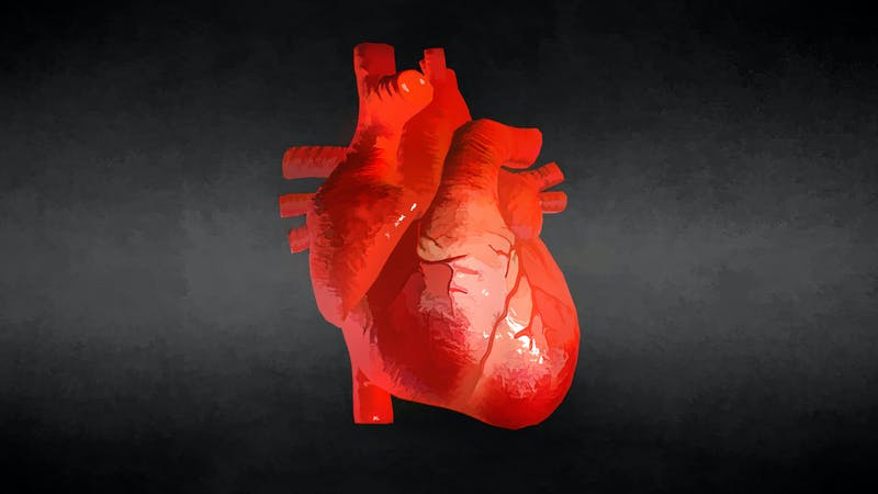 Watercolor Realistic Human Heart On Black Background. 3D illustration