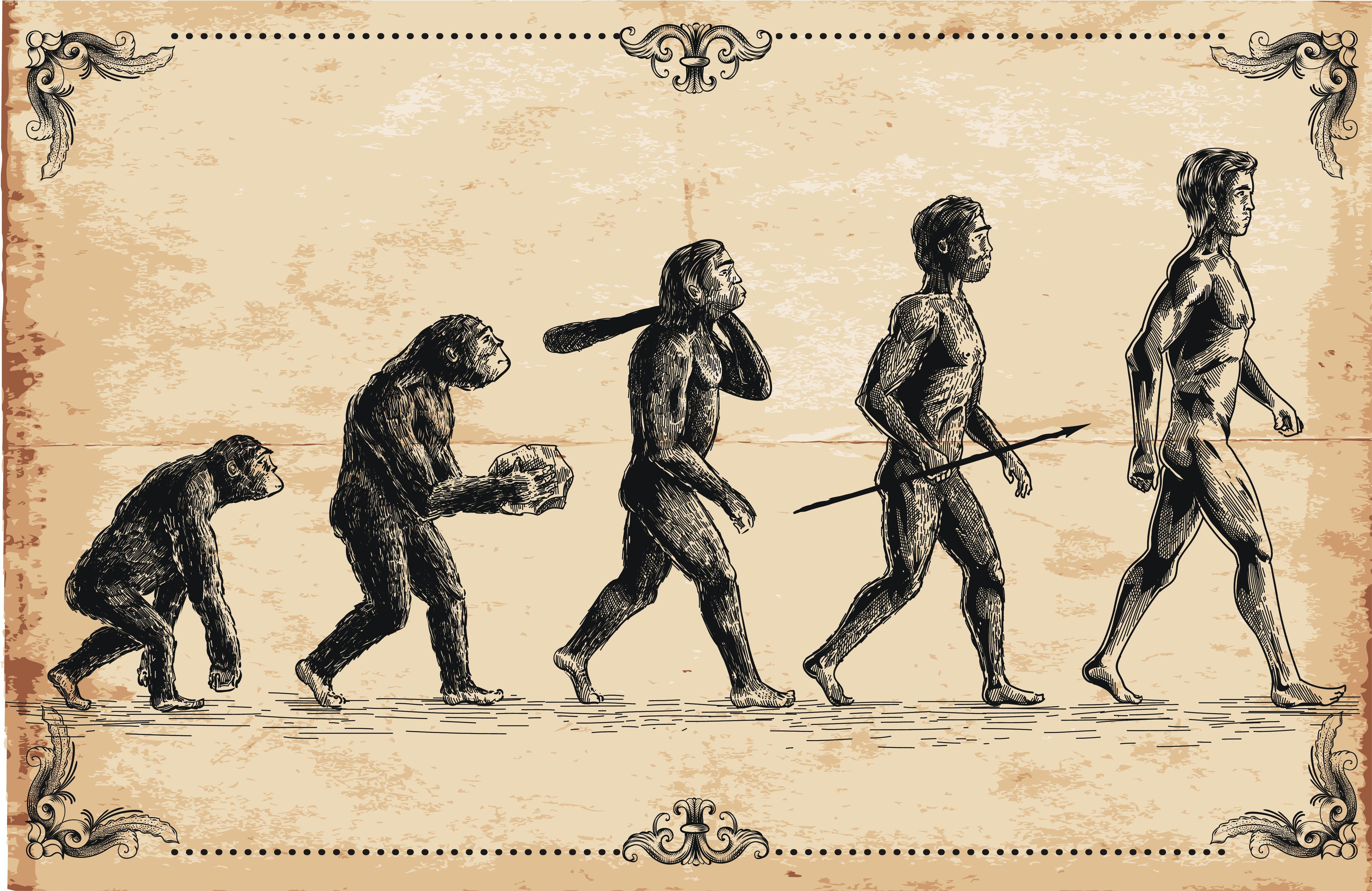Vector of human evolution concept