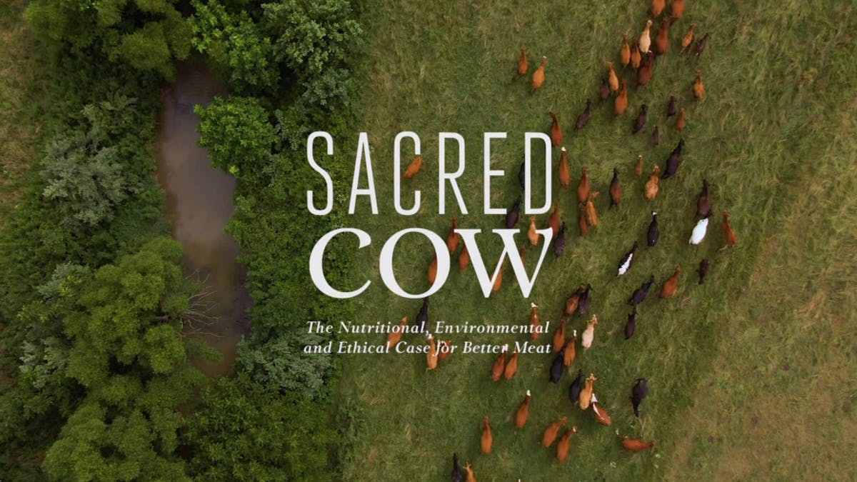 Sacred Cow review: a bold, transparent look at the case for better meat
