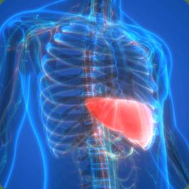 ketosis-improve-fatty-liver